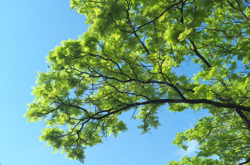 Amazing scenery with tree and the sky NO.4 royalty free stock photo