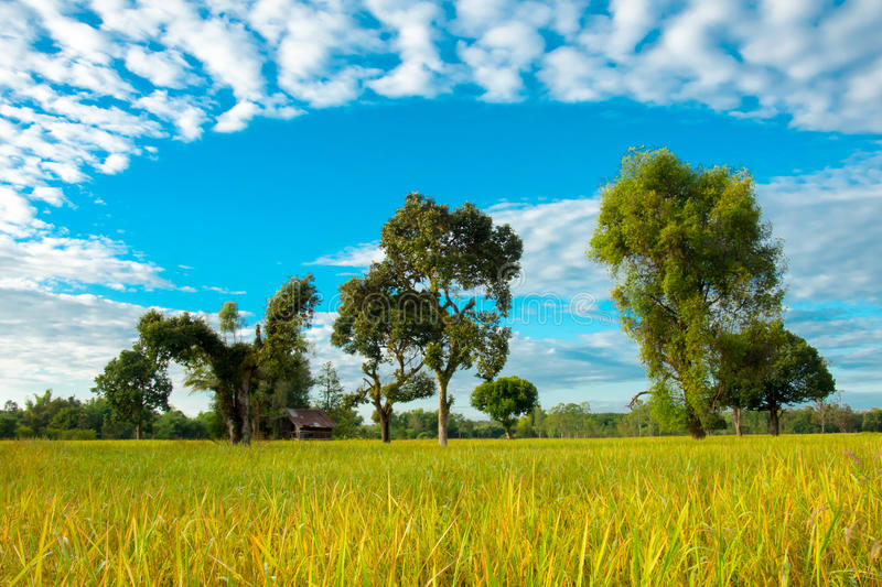 Amazing of sky. Landscape of amazing of sky with rice field stock photography