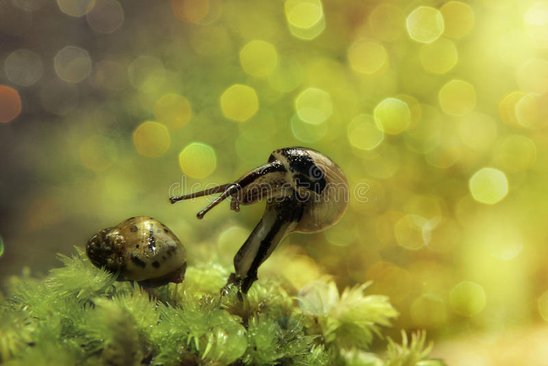 Amazing Smail And Golden Bokeh. Amazing snail world and beautiful bokeh royalty free stock image