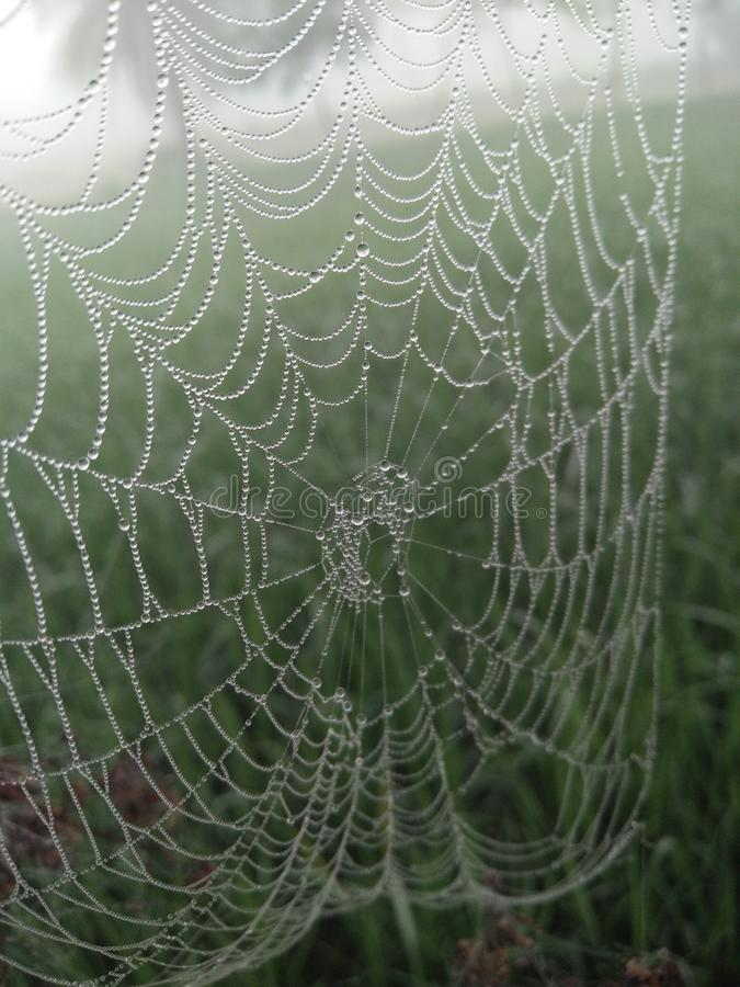 Amazing spider net. In winter seasion it looks like this stock image
