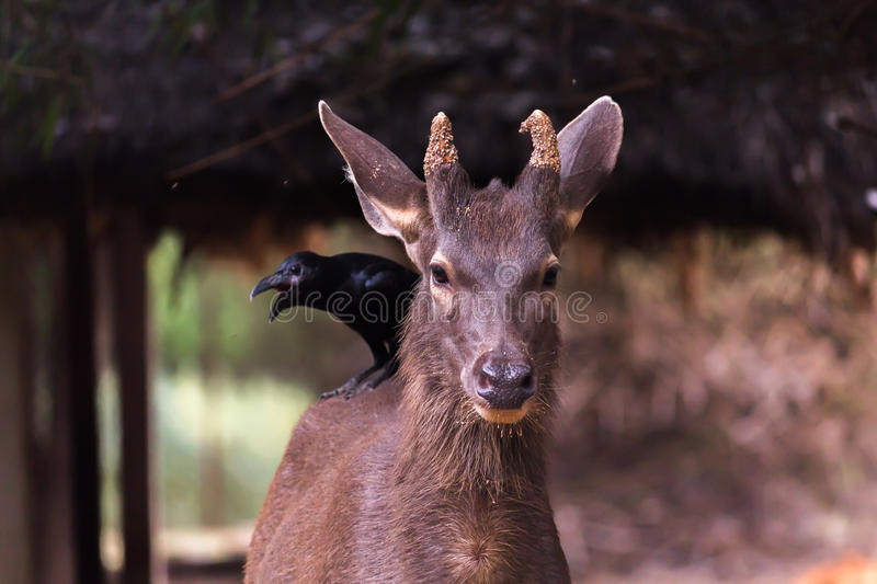 Amazing spotted deer stock photos