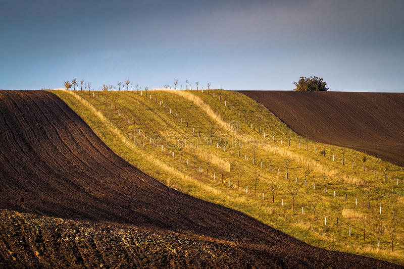 Amazing stripe patterns on waved fields of South Moravia. Called the Moravian Tuscany, green and brown autumn colors royalty free stock photos