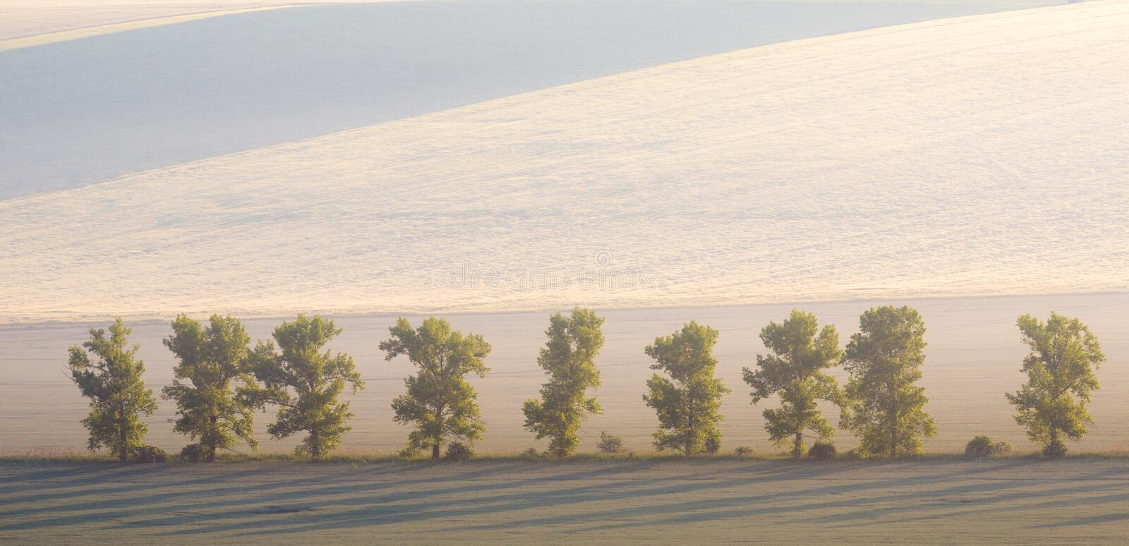Amazing Summer Morning Landscape With Several Trees On Wavy Meadow Background, Good Ecological Concept. stock images