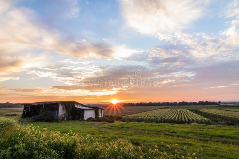 Amazing summer sunset over farmlands in the black dirt region of Pine Island, New York stock images