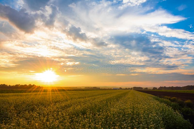 Amazing summer sunset over farmlands in the black dirt region of Pine Island, New York royalty free stock photo