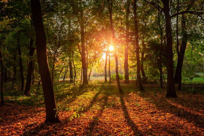 Amazing sun beam in het herfstbos bij zonsopgang, Polen royalty-vrije stock afbeeldingen