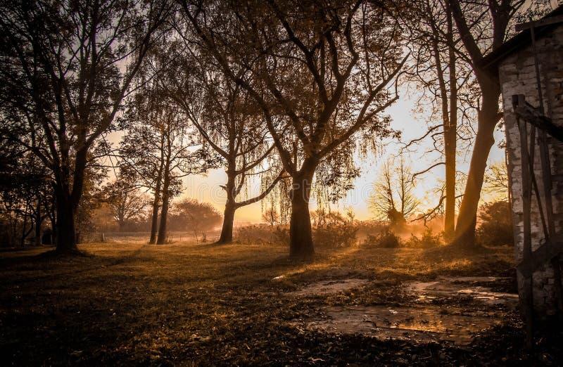 Amazing sunrise royalty free stock photo