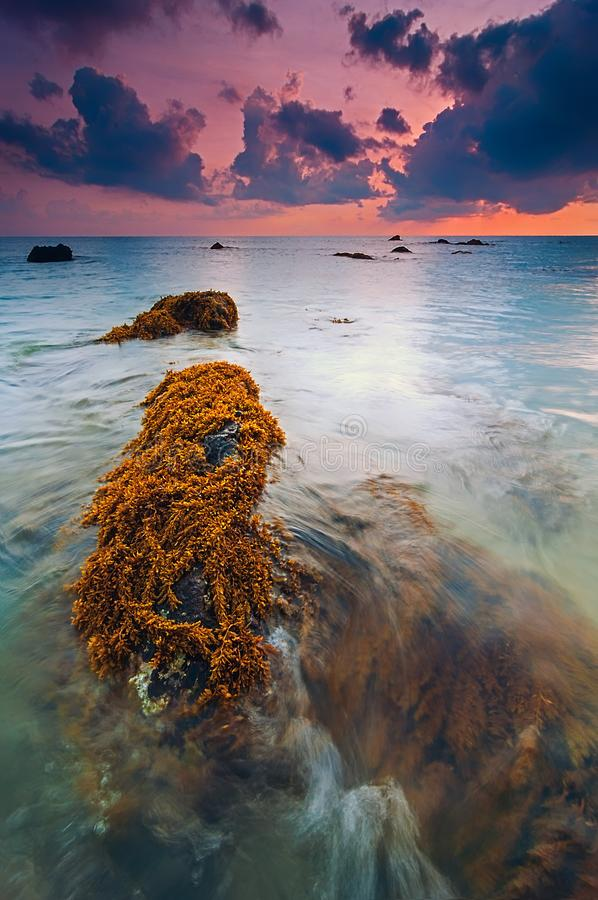 Kemasik Beach, Dungun Terengganu. Amazing sunrise moment in east coast peninsular Malaysia on low tide season with sea weed appears on rocks royalty free stock photos