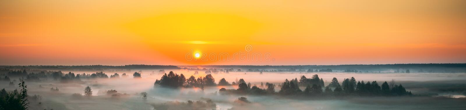 YongFoto 10x8ft Narcissus Land Backdrop Foggy White Flowers Field Mountains Forest Trees Misty Morning Sunrise Dawn Scenery Photography Background Wallpaper Artistic Portrait Photoshoot Props Banner