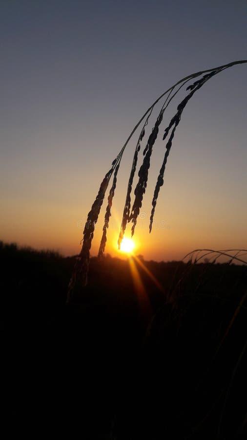 Amazing sunset royalty free stock photography