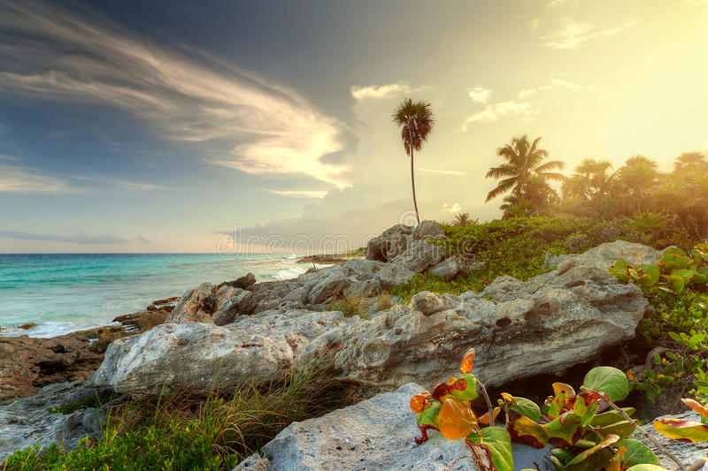 Download Amazing Sunset At The Jungle Stock Image - Image: 22686737
