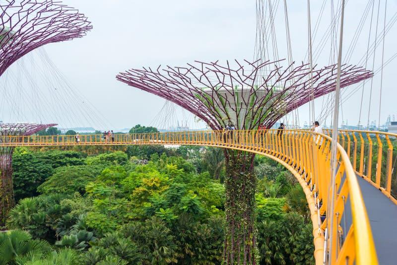 Amazing Supertree, un impresionante paseo por los jardines de The Gardens by the Bay es un colorido parque futurista en la bahía  imagen de archivo