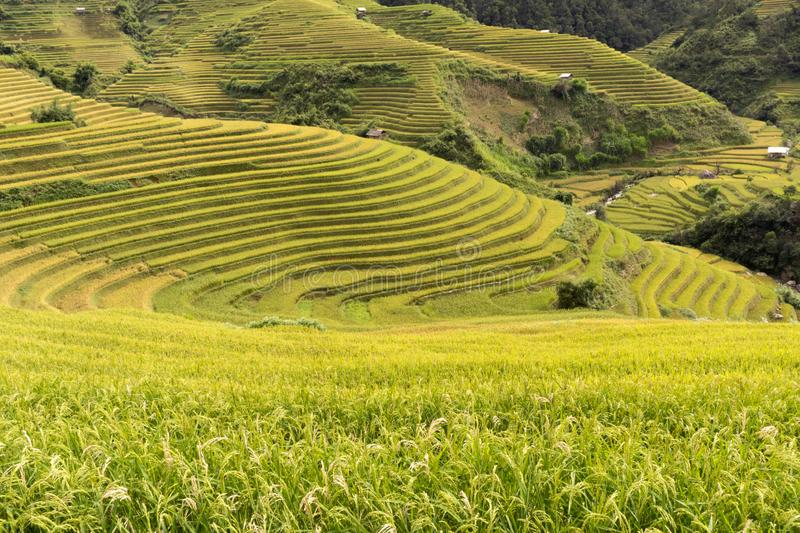 Great terraced fields in Sapa or Ha Giang Vietnam. Amazing terraced fields tourism in Sapa or Ha Giang, Vietnam, wonderful scenery created by humans because of stock photography