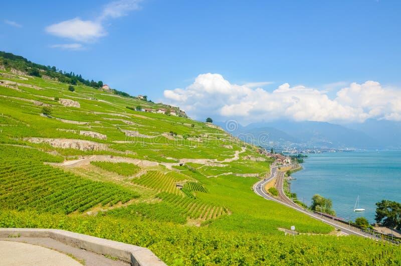 Amazing terraced vineyards on slopes by Geneva Lake in Switzerland. Lavaux wine region. Swiss landscape. Switzerland summer. Green stock photography
