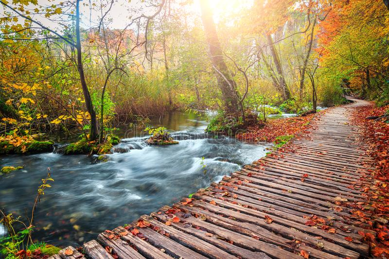 Amazing tourist pathway in colorful autumn forest, Plitvice lakes, Croatia. Beautiful touristic wooden pathway in the colorful autumn deep forest with clean stock photography