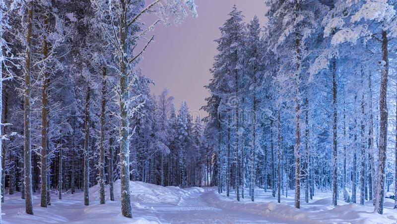 Amazing Tranquil Winter Forest Scenery in Suomi Nordic Area stock images