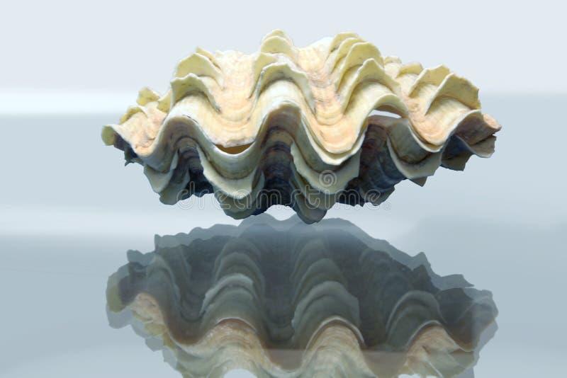Amazing tridacna royalty free stock image