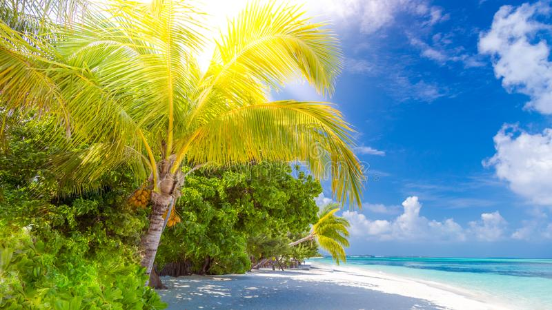 Beautiful tropical landscape. Maldives island beach and palm trees. Perfect tropical banner. Amazing tropical beach landscape. Palm trees and white sand and stock photography