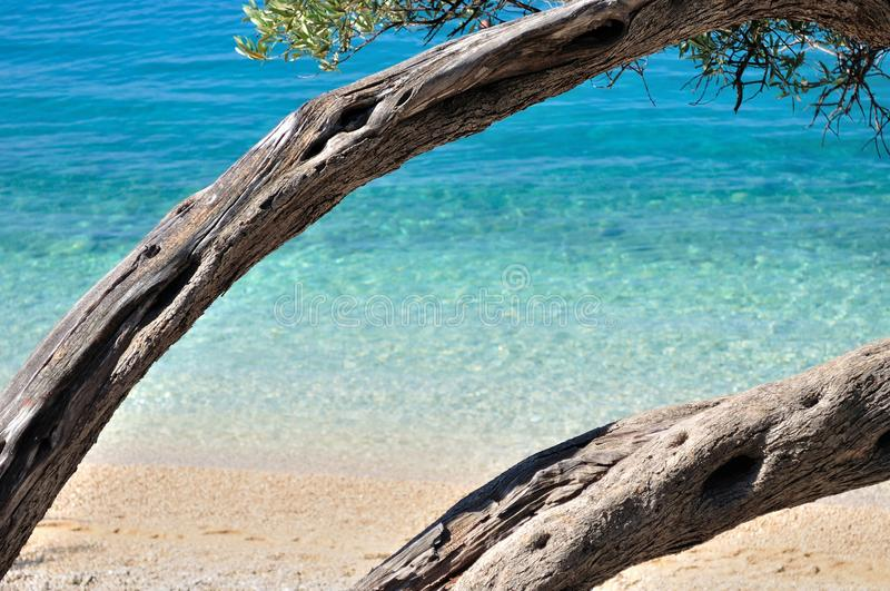 Amazing tropical beach with turquoise sea royalty free stock images