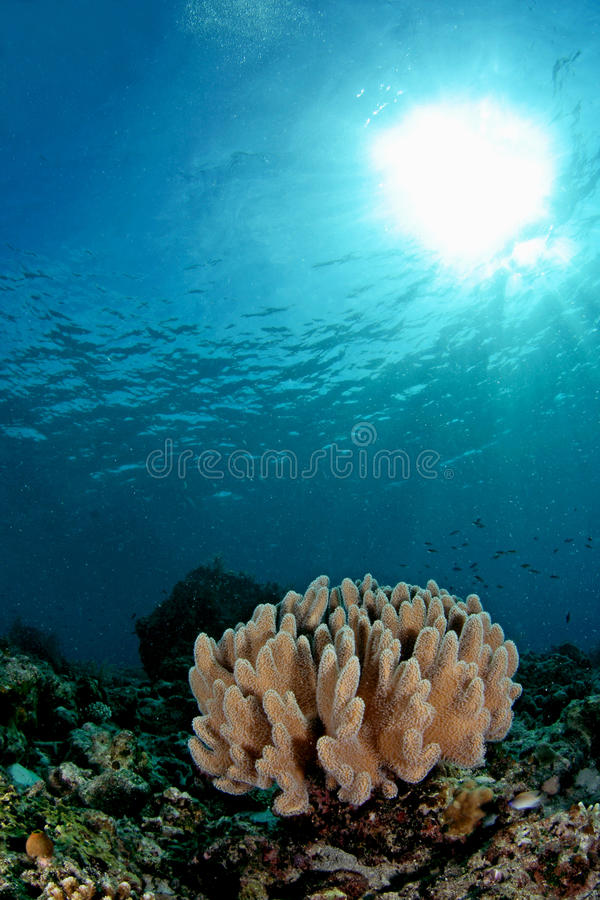 Download Amazing Underwater Seascapes Stock Photo - Image of underwater, ocean: 11582706