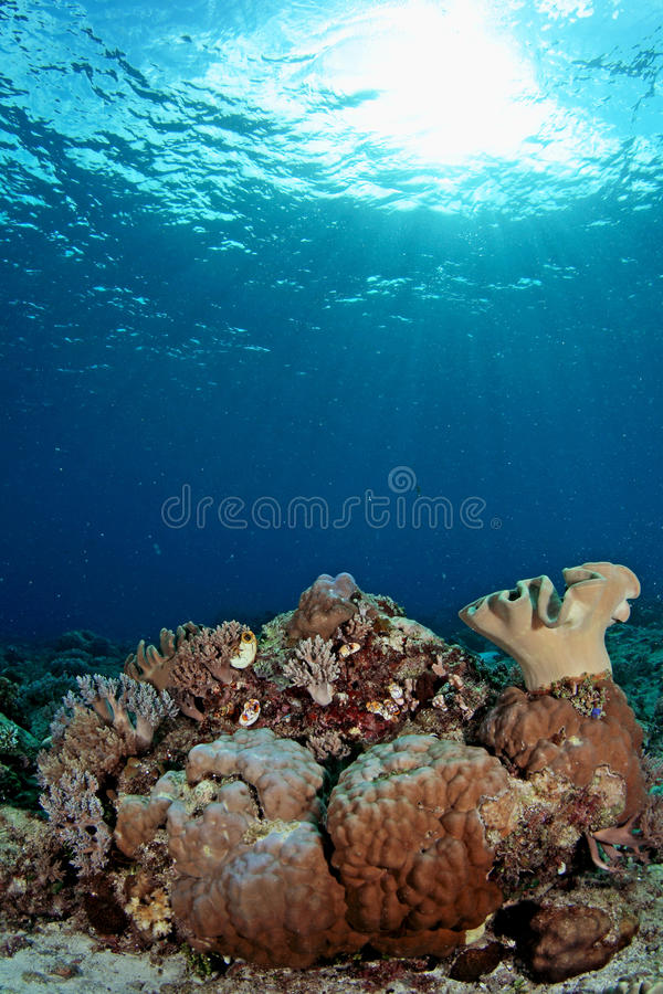 Free Amazing Underwater Seascapes Stock Images - 11582804