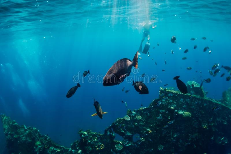 Amazing underwater world with tropical fish and corals at shipwreck royalty free stock images