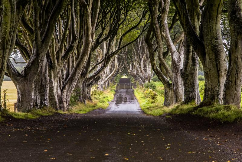 Dark Hedges without people. An amazing view of Dark Hedges road, using photo stacking technique to hide all the people crowding the place. A very stunning result stock photography
