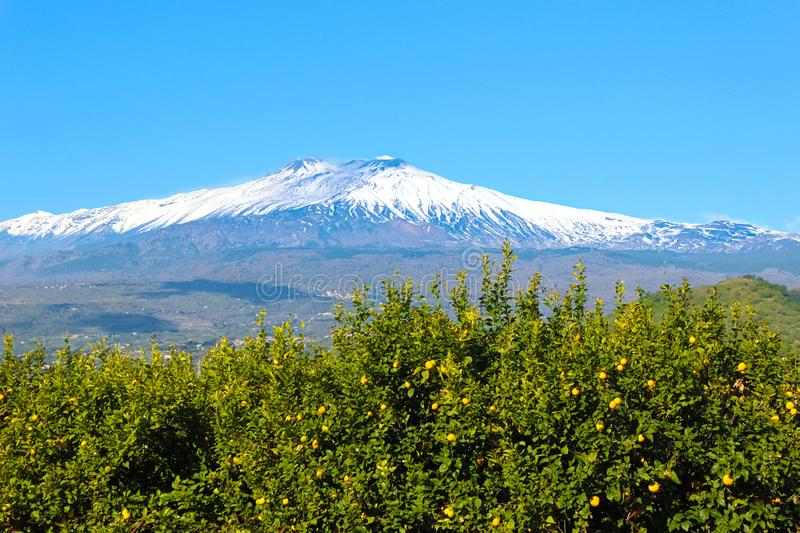 Amazing view of Mount Etna and lemon trees with ripe yellow lemons on adjacent fields. Etna volcano is located in Sicily, Italy. Snow on the top of the stock photography