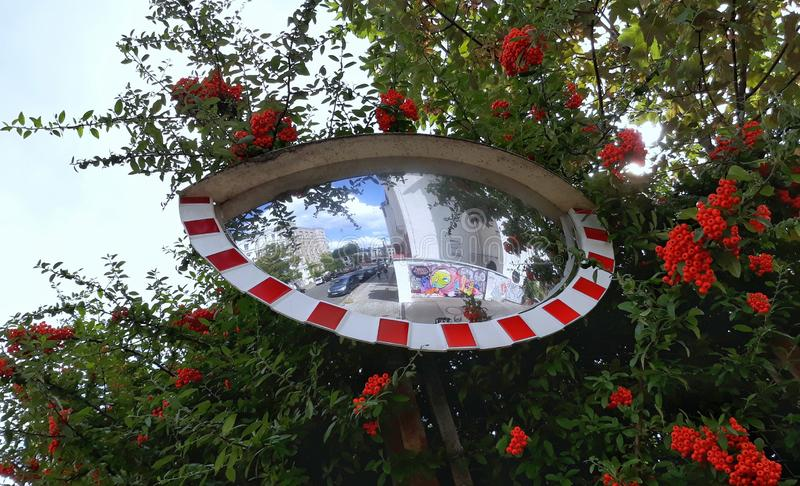 Amazing view to a red striped traffic mirror and a lot of red rowan berries. Architecture, background, beautiful, blue, city, color, colorful, day, freedom stock photos