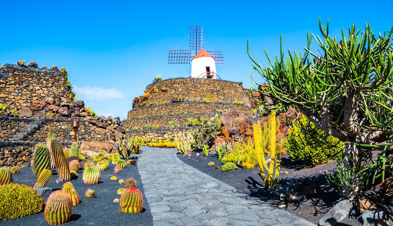 Amazing view of tropical cactus garden Jardin de Cactus in Guatiza village. Location: Lanzarote, Canary Islands, Spain. Artistic stock image