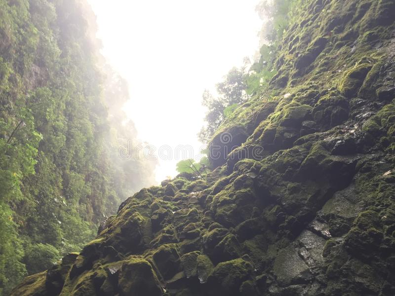 Amazing view when walking in the rainforest, Costa Rica. Bonitos paisajes en Costa Rica. royalty free stock photo