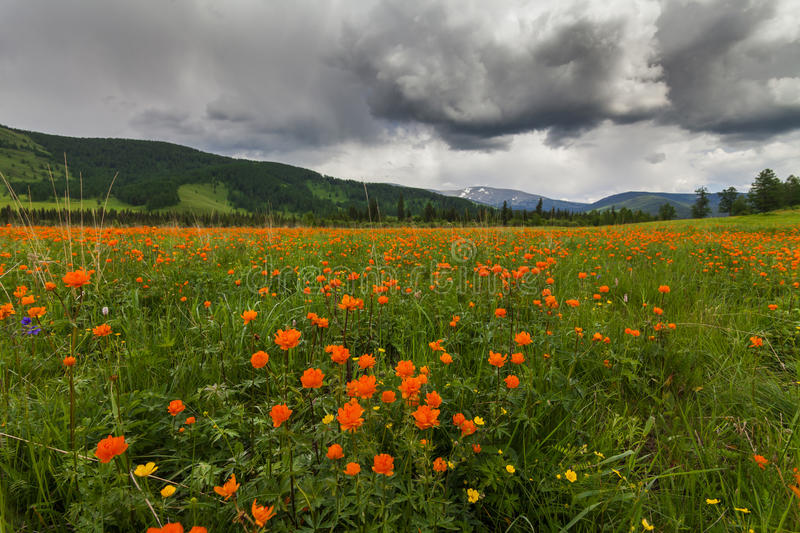 Amazing views of the flowery meadow royalty free stock photography