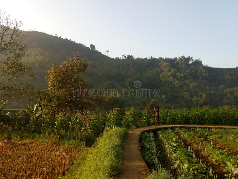Village View padi little road royalty free stock images