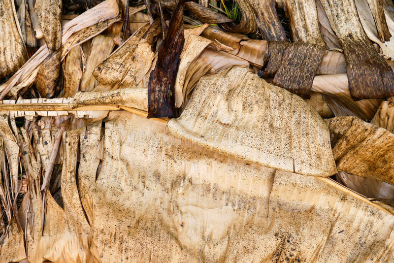 Amazing wet dry banana leaves artistic and natural composition stock photo