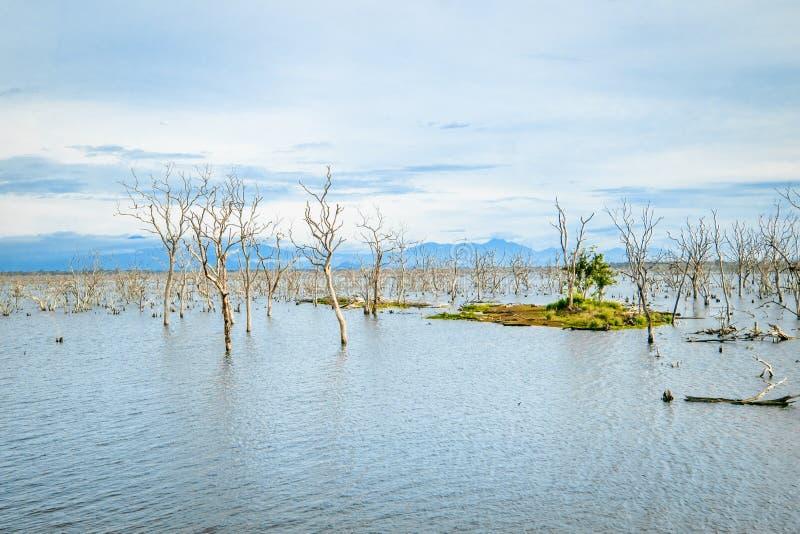 Amazing wild nature of Yala National Park in Sri Lanka stock image