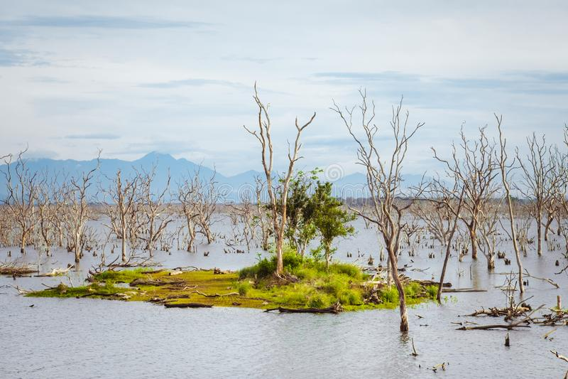 Amazing wild nature of Yala National Park in Sri Lanka stock photo