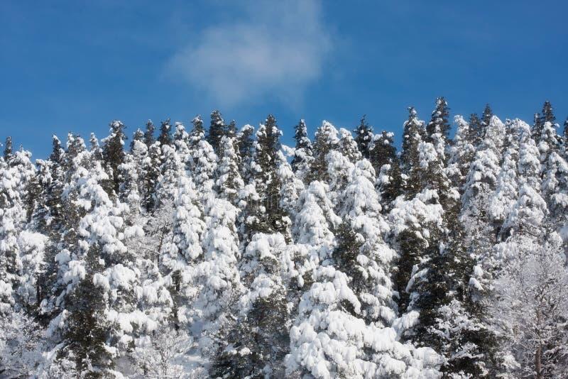 Amazing Winter Landscape Stock Image