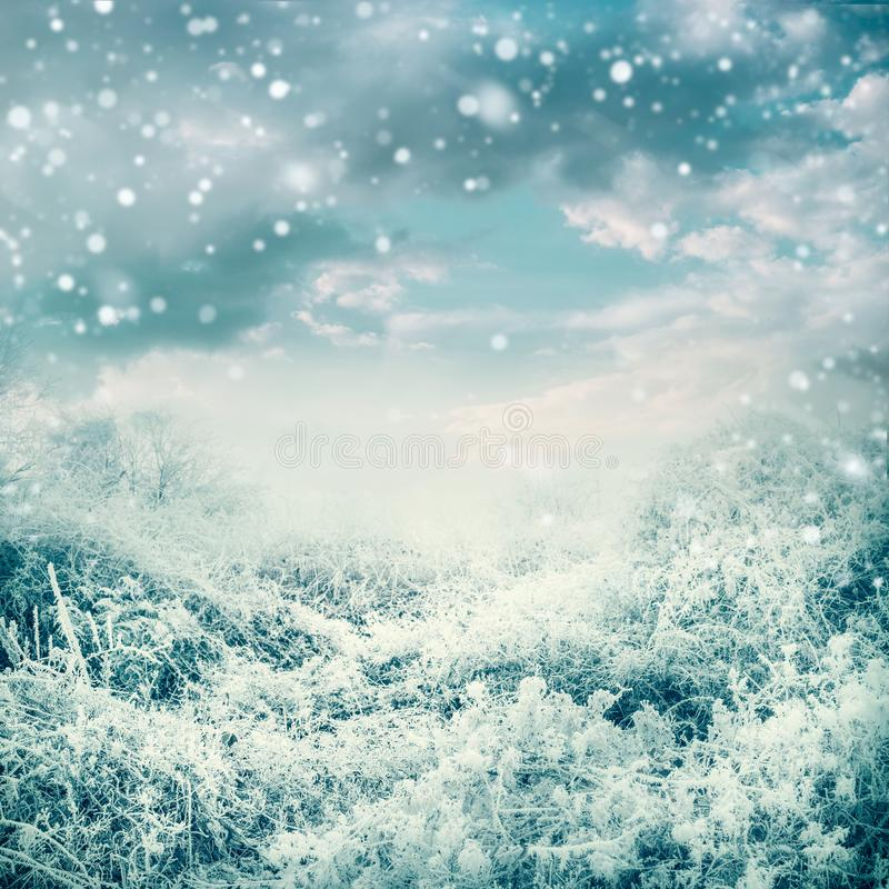 Amazing winter landscape with frozen trees and plants at beautiful sky background stock photos