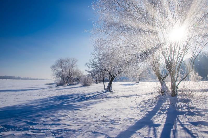 Amazing winter scenery with bare trees covered by frost on snowy meadow under blue sky. Winter nature concept, shadow, sunbeam, christmas, backgrounds, branch stock images