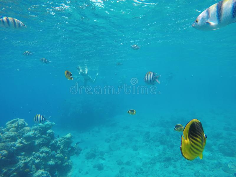 Amazingly beautiful coral reef, a lot of fish royalty free stock photography