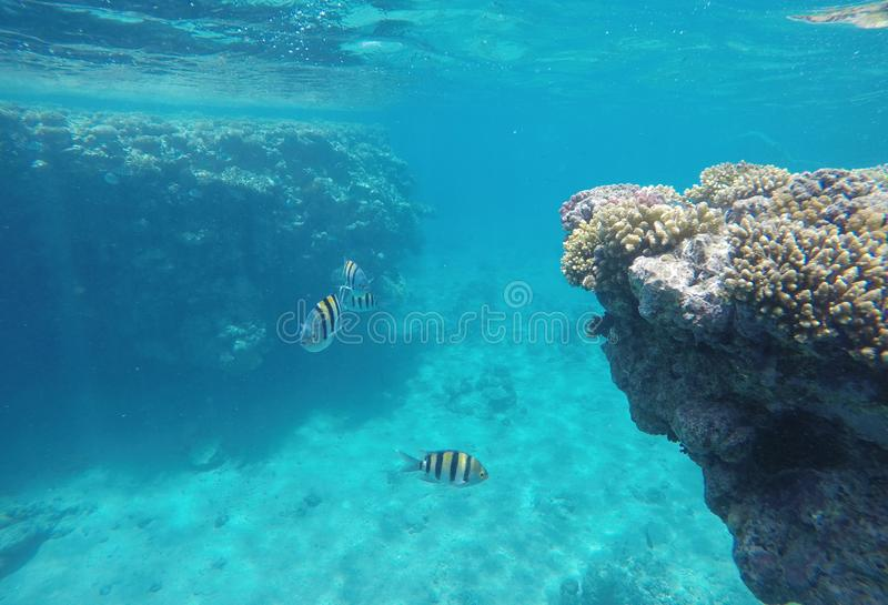 Amazingly beautiful coral reef, a lot of fish royalty free stock images