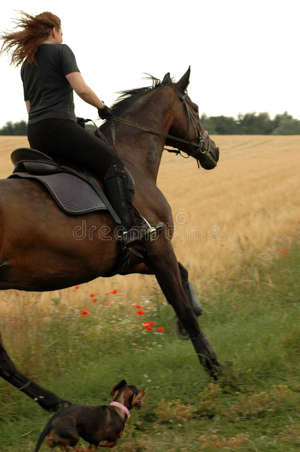 Amazon. A horsewoman and horse compete with a dog royalty free stock images