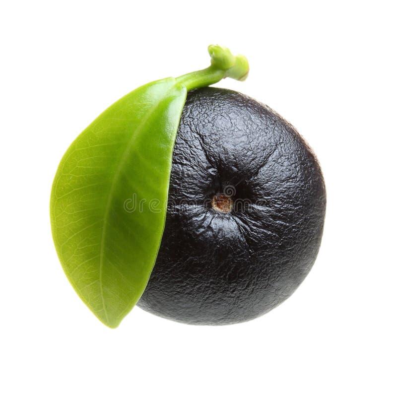 Amazon acai berry fruit with leaf. Isolated on white background stock image