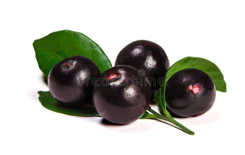 The amazon acai fruit stock image