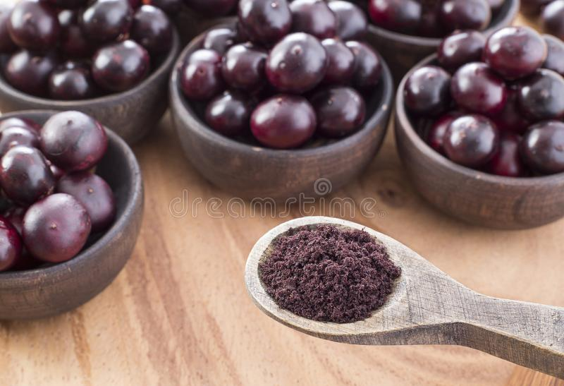The amazon acai fruit. The acai is a fruit of characteristic very dark purple color stock photography