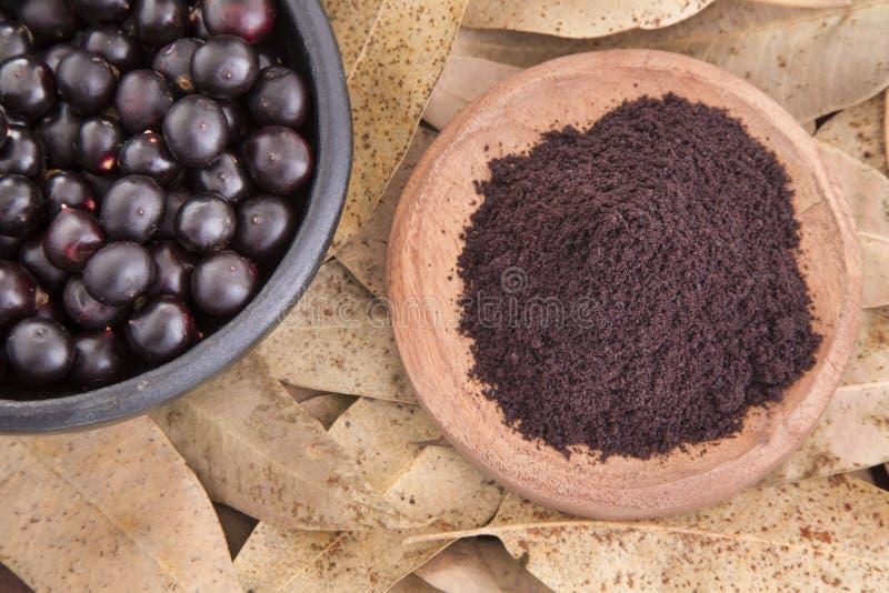 The amazon acai fruit & x28;Euterpe oleracea& x29;. The acai is a fruit of characteristic very dark purple color stock images