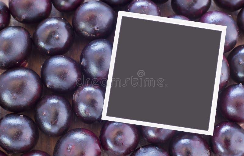 The amazon acai fruit Euterpe oleracea. The acai is a fruit of characteristic very dark purple color stock photos