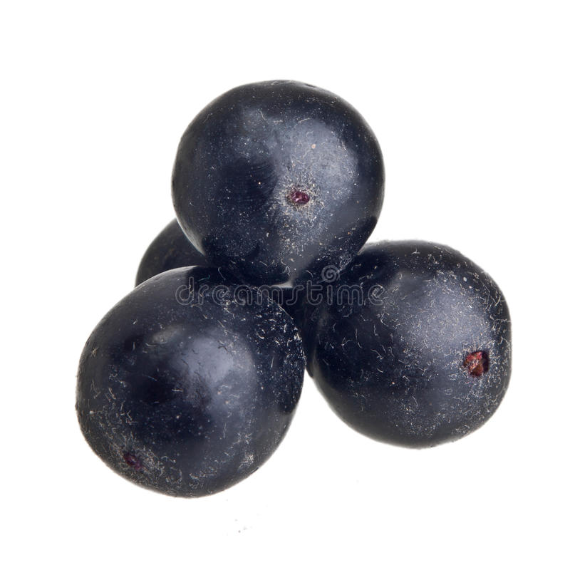 Amazon acai fruit. Isolated on white background royalty free stock image