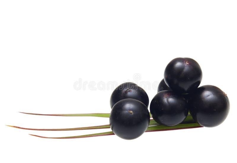 Amazon acai fruit. With palm leaves isolated on white background royalty free stock image