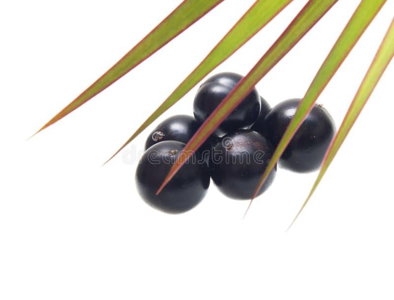 Amazon acai fruit. With palm leaves isolated on white background royalty free stock photography